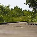 Boardwalk (2680632044).jpg
