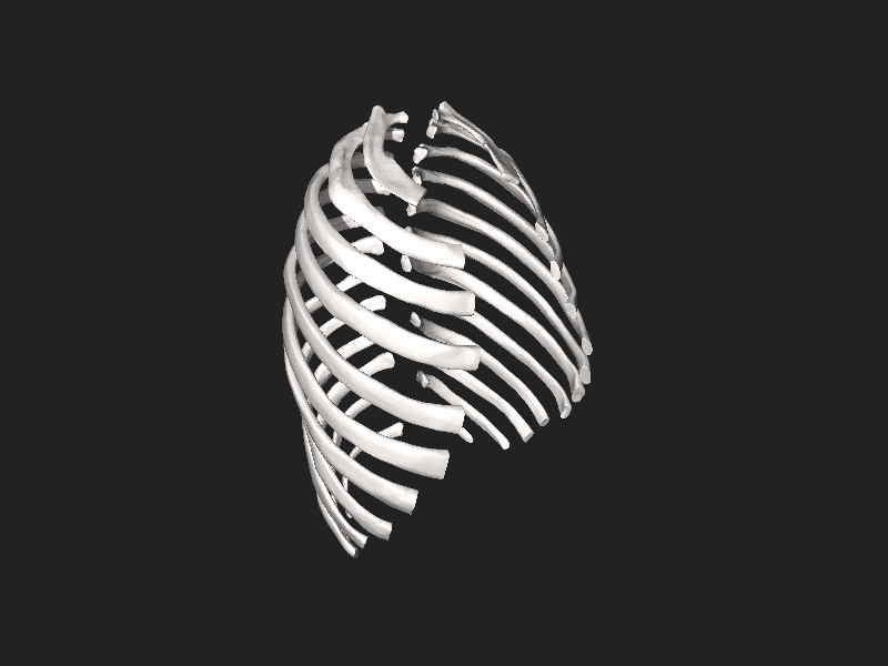 File:BodyParts3D Rib.stl