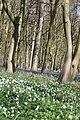 Bois d'Hubermont, Bois d'Antoing, Bois de Leuze 10.jpg