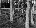 Bomen op de Veluwe, Bestanddeelnr 252-0574.jpg
