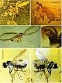 Bonn zoological bulletin (2013) (20207678589).jpg