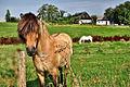 Bornholm - farm and horses.jpg