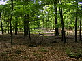 Bosgebied zonder ondergroei in het Nationaal Park Veluwezoom.JPG
