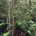 Bosque virgen de cerros de Quiman.JPG