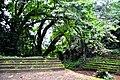 Botanic garden limbe91.jpg