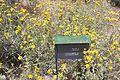 Botanical Garden on Mount Scopus visit 2011 01.JPG