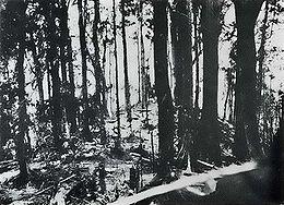 Bougainville - Hill 260
