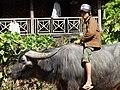 Boy with Buffalo - Outside Hsipaw - Myanmar (Burma) - 02 (12227663793).jpg