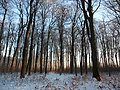 Brachenfelder Gehölz im Schnee - panoramio.jpg
