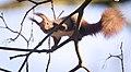 Branch walker (46320914955).jpg