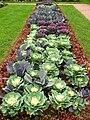 Brassica in a flowerbed 02.jpg