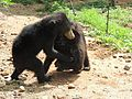 Buddy bears play.jpg