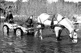 Bundesarchiv Bild 101I-394-1477-14 Russland Soldaten in Anhänger Pferd cropped