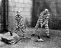 BusterKeaton Convict 13 scene.jpg