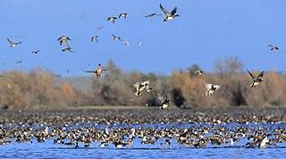 Butte Sink Wildlife Management Area