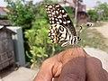 Butterfly20171025 124109.jpg
