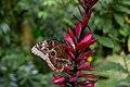 Butterfly - panoramio (22).jpg