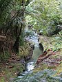 Byers Walk, Waitakere Ranges, North Island - panoramio (1).jpg