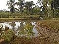 Córrego - panoramio (4).jpg