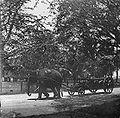COLLECTIE TROPENMUSEUM Militair transport met een olifant TMnr 10027941a.jpg
