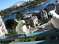 Cacatua galerita -balcony -Sydney -Australia-8d.jpg