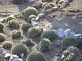 Cadereyta Botanical garden (5760892051).jpg