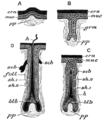 Cambridge Natural History Mammalia Fig 002.png