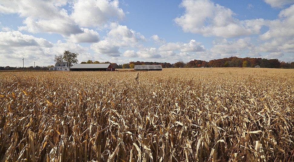 Campo de maiz, Walker, Indiana, Estados Unidos, 2012-10-20, DD 03