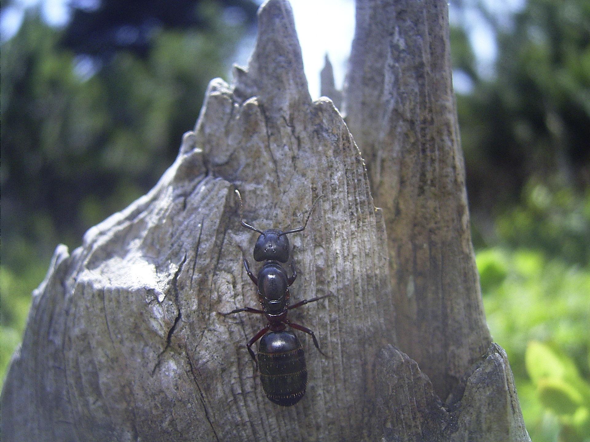 Muurahaiset Sisällä