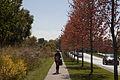 Campus Fall 2013 113 (10291935086).jpg