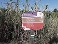 Cartel de señalización en la desembocadura del río Mijares (Castellón) 20190831 104029.jpg