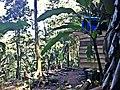 Casa - panoramio (32).jpg