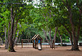Casinhas de madeira.jpg