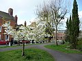 Castle Gardens, Ludlow - geograph.org.uk - 1248590.jpg