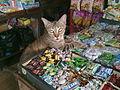 Cat loves sweets.jpg