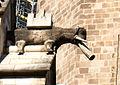 Catedral de Barcelona - 2.jpg