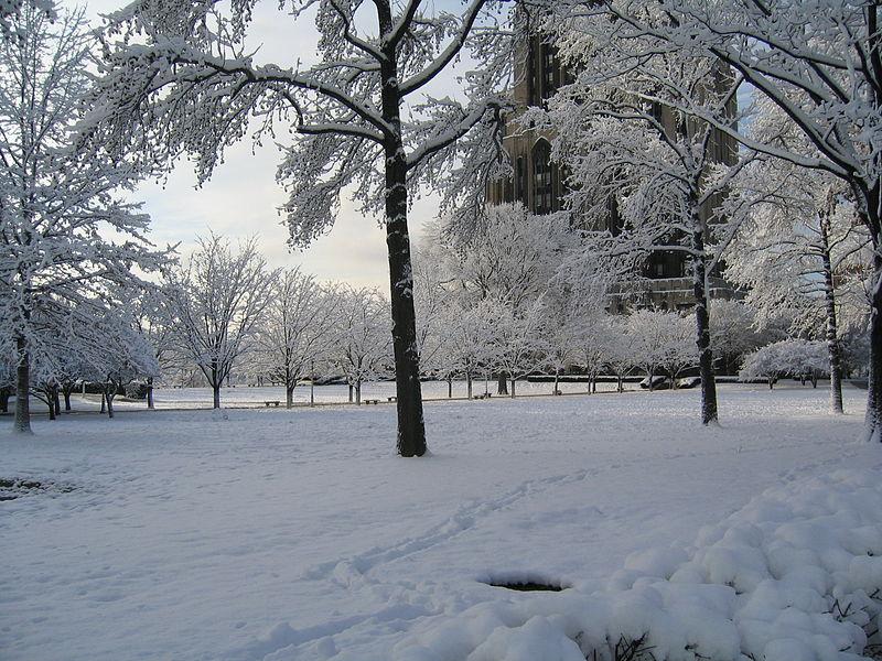 CathedralofLearningLawinWinter.jpg