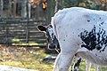 Cattle Image.jpg