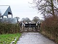 Cattle at the gate, Middlemarsh - geograph.org.uk - 1156297.jpg