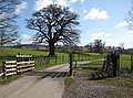 Cattle grid, Eastnor Deer Park - geograph.org.uk - 746458.jpg