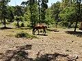 Cavalos nos Jardins do Parque da Pena em Sintra (36881159730).jpg