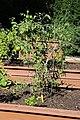 Chadwick Arboretum and Learning Gardens (43753178930).jpg