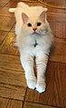 Chairman Meow Bao.jpg