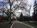 Chkalov Health Spa park 11.JPG