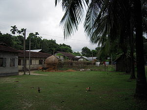 Chokapara - A view of Chokapara village, a typical Goalpariya village