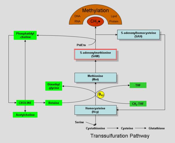 وبلاگ پزشکی مولکولی -بالینی 1356