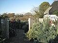 Choosing a Christmas tree, Norton Green - geograph.org.uk - 2191456.jpg