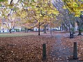 Churchyard path on an autumn afternoon - geograph.org.uk - 1557161.jpg