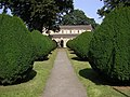 Clipped Yews - geograph.org.uk - 50443.jpg