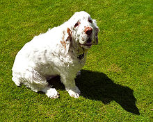 A mostly white dog sitting on grass. Its shadow is noticeable on the ground.